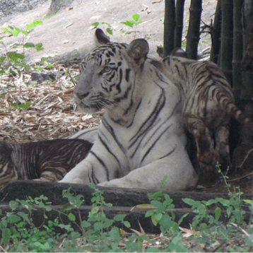 Arignar Anna Zoological Park - WOC layover tips