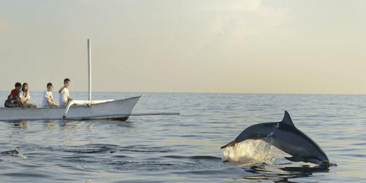 Mauritius Layover- Dolphin spotting