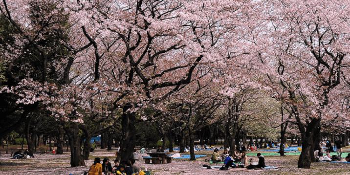 Tokyo Layover -Yoyogi Koen